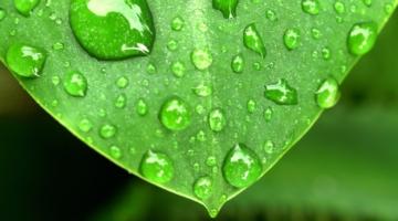 Verden i grønt fremskridt